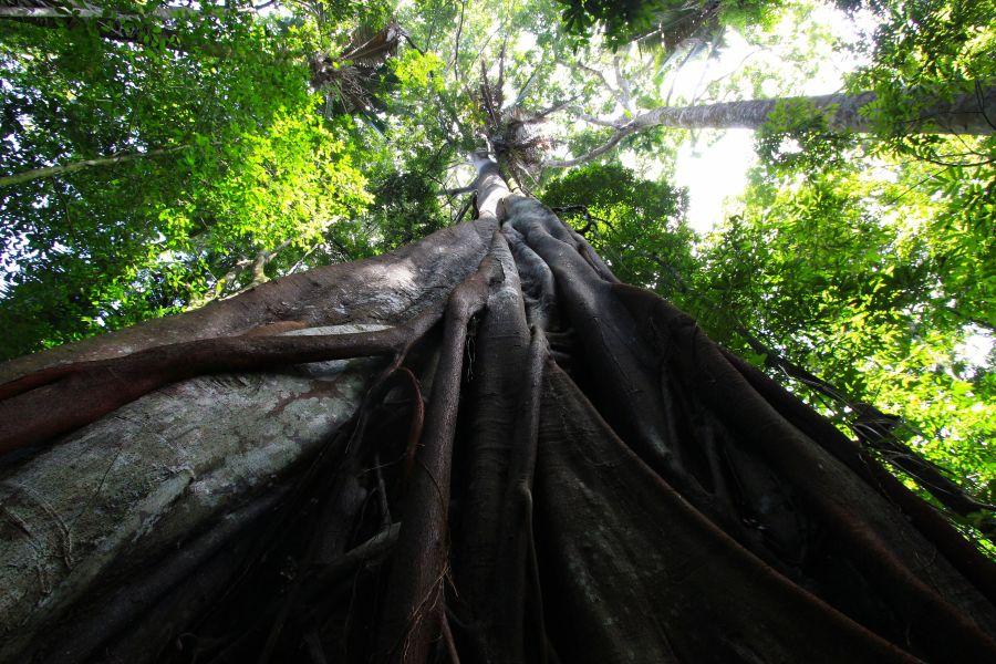 Foto: Benjamin Gaillard, Apuzueiro oerboom